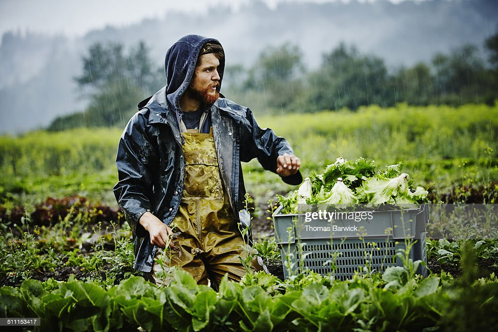 Farmer looking out across field while harvesting : Stock Photo