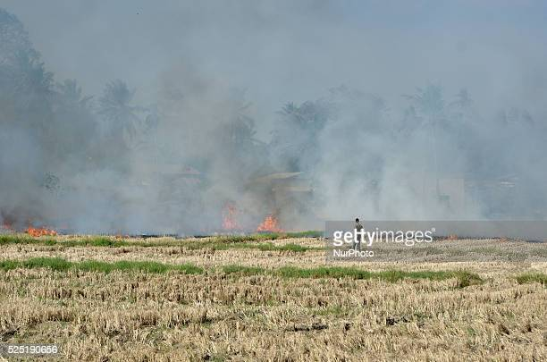 Farmer looks after the open burning to ensure the straw burning process is under controlled in Kangar, Malaysia, on 24th February 2016.