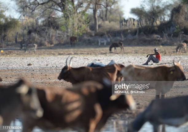 A farmer looks at cattle standing in one of the dry channel of the wildlife reach Okavango Delta near the Nxaraga village in the outskirt of Maun on...