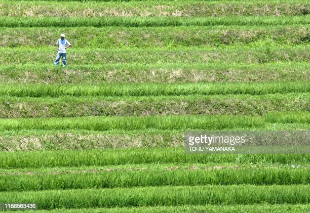 A farmer looks at his terraced paddy field which has been cultivated for more than 1000 years at Asuka central Japan 26 July 2002 An overabundance of...