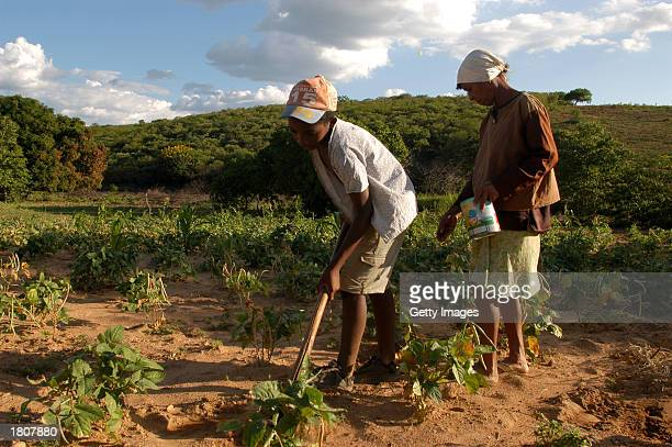 Farmer Luiza Vitalina da Conceiao with the help of one of her six children seeds corn on her small plot farm February 14 2003 in Acaua Brazil The...