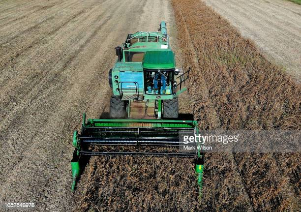 Farmer Mark Catterton drives a John Deere Harvester while harvesting soybeans during his fall harvest on October 19 2018 in Owings Maryland The...