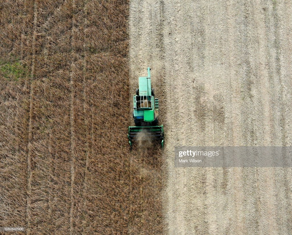 Soybean Harvested In Maryland : News Photo