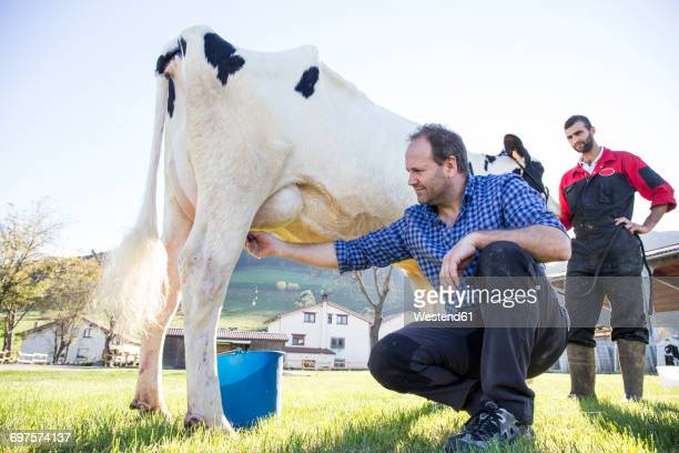 farmer milking a cow on pasture - mann beim melken stock-fotos und bilder
