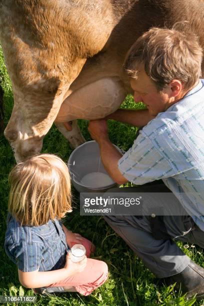 farmer milking a cow on pasture watched by his daughter - mann beim melken stock-fotos und bilder