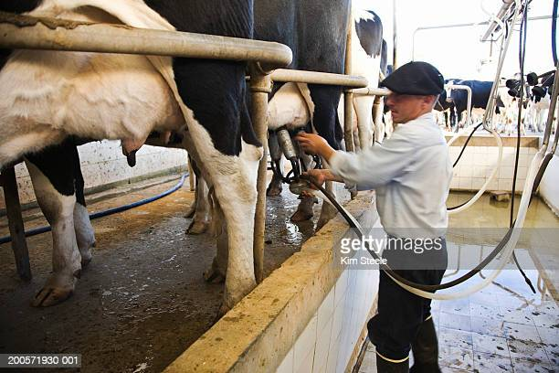 farmer milking herd, chascomus, argentina - cultura argentina imagens e fotografias de stock