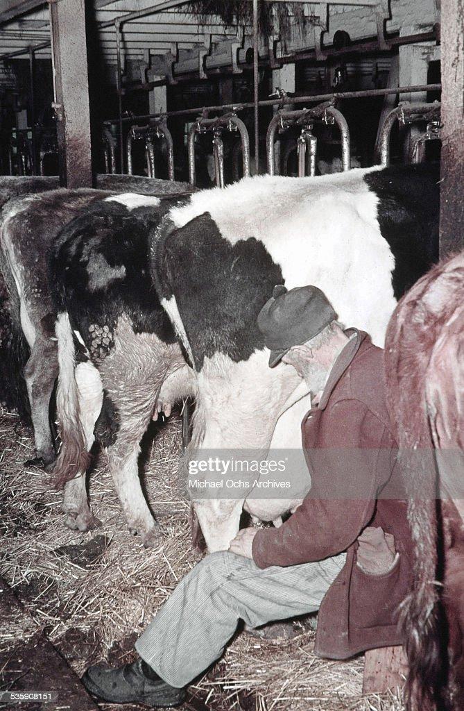 A farmer milks his cows by hand in the winter in North Dakota.