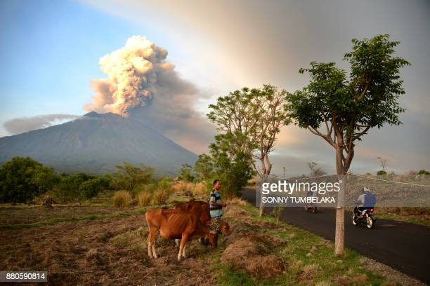 A farmer moves his cattle as Mount Agung erupts seen from Kubu subdistrict in Karangasem Regency on Indonesia's resort island of Bali on November 28...
