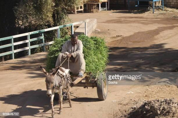 een boer op een ezel-kar - koets stockfoto's en -beelden