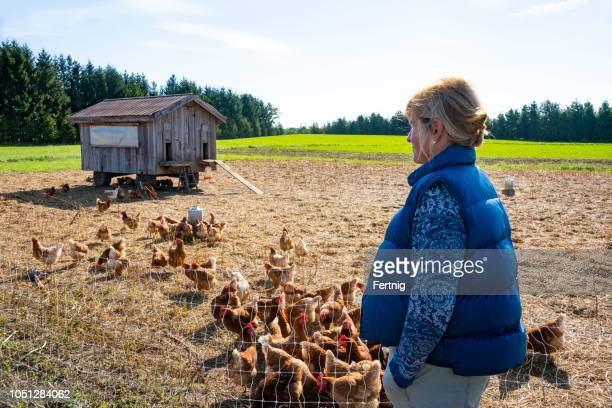 a farmer on an organic free range small scale chicken farm - chicken coop stock pictures, royalty-free photos & images