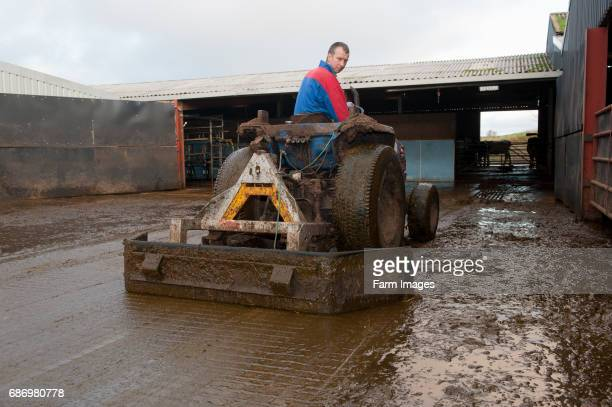 Farmer on tractor cleaning cattle yard with scraper.