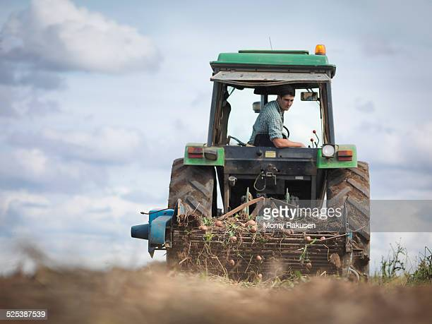 farmer on tractor harvesting organic potatoes - rauwe aardappel stockfoto's en -beelden