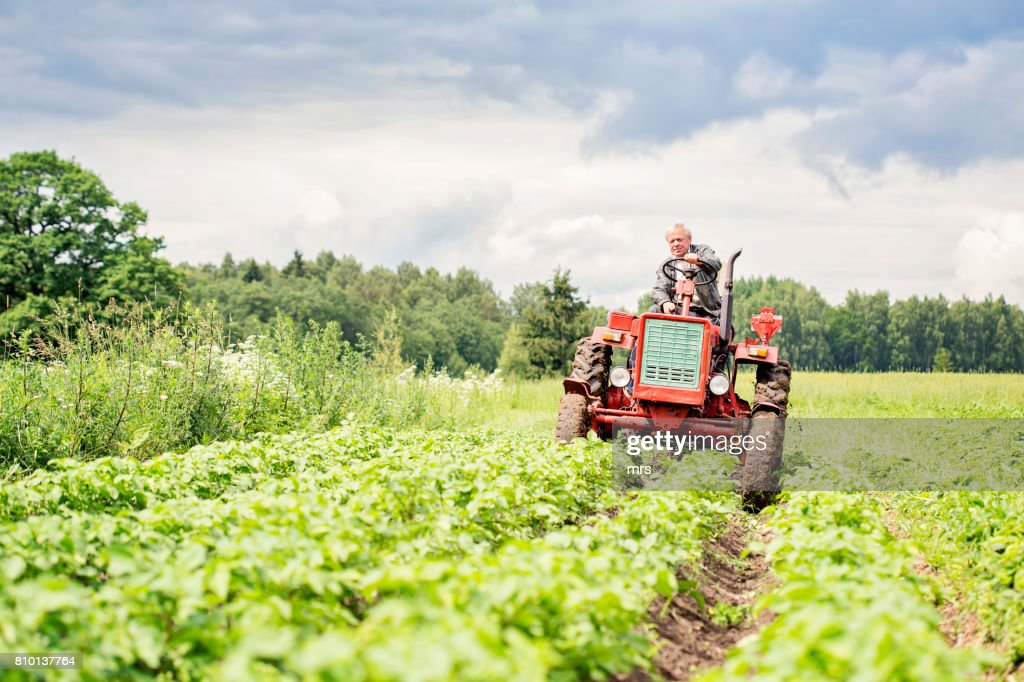 Farmer on tractor : Stock-Foto