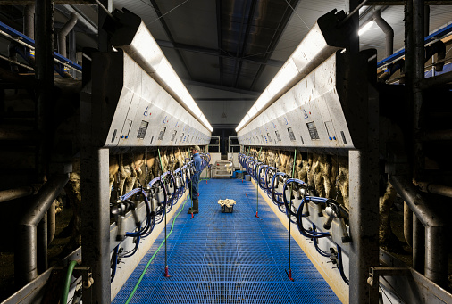 Farmer operating modern milking machine in early morning, Wyns, Friesland, Netherlands - gettyimageskorea