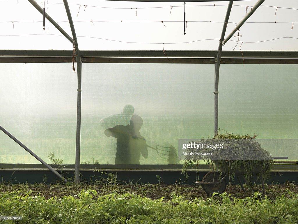 Farmer Outside Polytunnel : Stock Photo