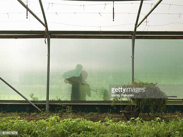 farmer outside polytunnel - monty shadow stock photos and pictures