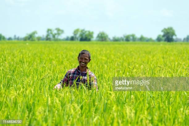 farmer over paddy fields. - shaifulzamri stockfoto's en -beelden