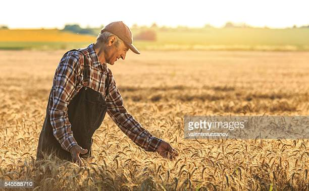 Farmer overlooking at new crops