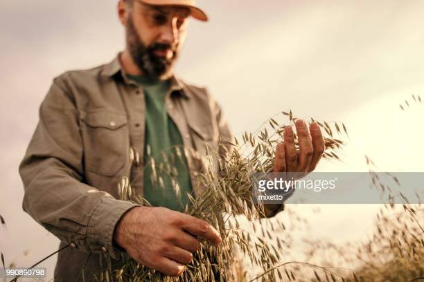 farmer overlooking the success of his crops - selective focus stock pictures, royalty-free photos & images