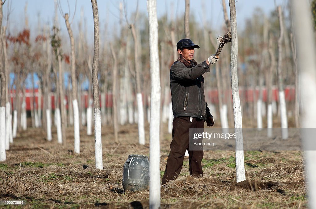 A farmer paints a poplar tree in Pinggu, on the outskirts of Beijing, China, on Saturday, Nov. 17, 2012. China's gross domestic product slowed to 7.4 percent in the July-September period from a year earlier, the weakest in three years. Photographer: Tomohiro Ohsumi/Bloomberg via Getty Images