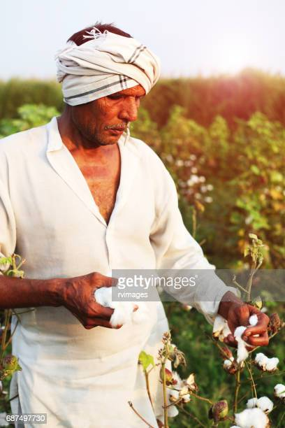 Farmer picking cotton in the field