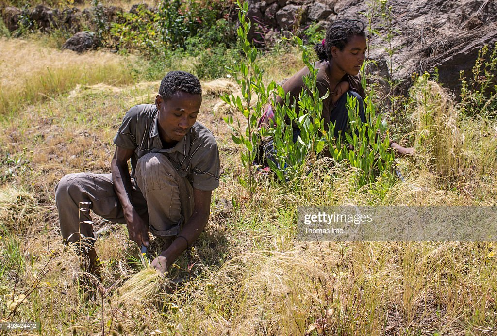 Agriculture in Ethiopia : News Photo