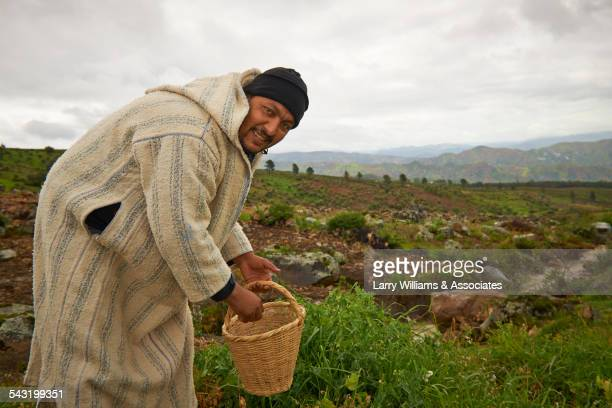 farmer picking vegetables in rural field - homme marocain photos et images de collection
