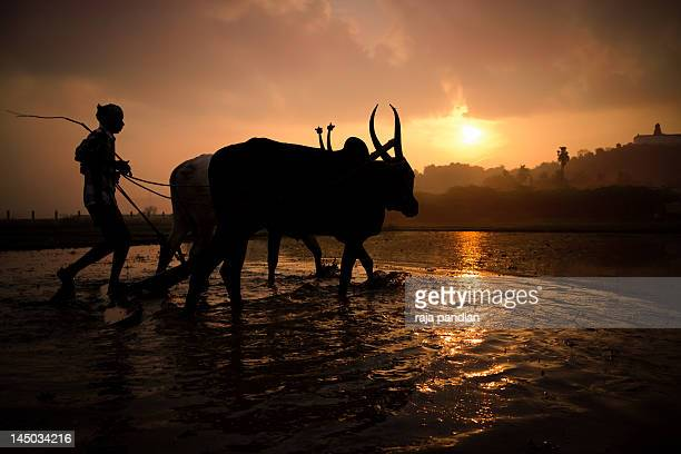 farmer - tamil nadu stock pictures, royalty-free photos & images