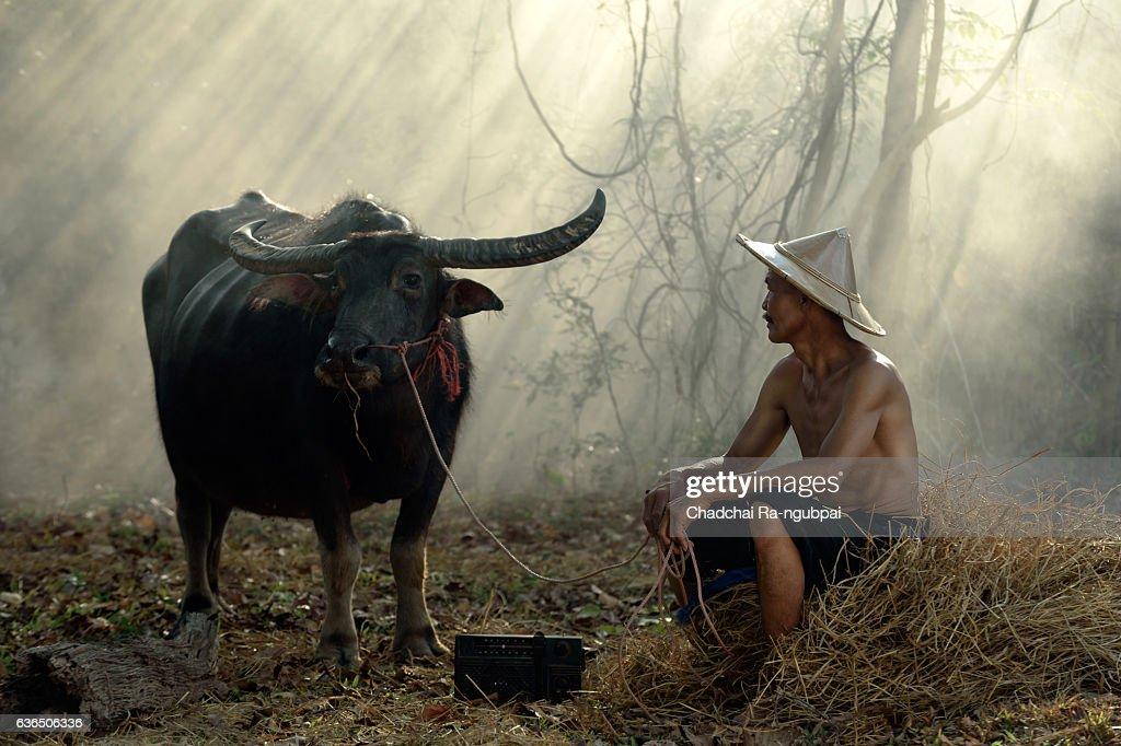 farmer : Stock Photo