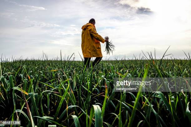 farmer - harvesting stock pictures, royalty-free photos & images