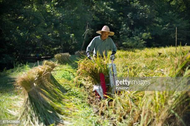 農業従事者 - 水田 ストックフォトと画像