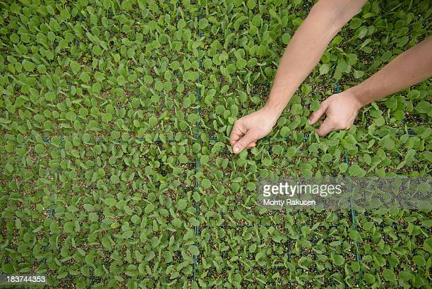 farmer planting seedlings on organic farm, close up - organic farm stock photos and pictures