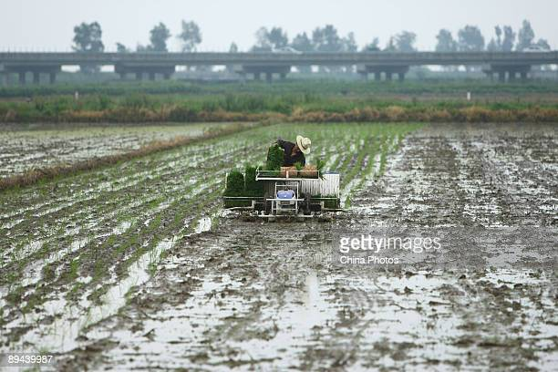 A farmer plants late rice paddy seedlings with a transplanter in a field at the Yuecheng Township on July 29 2009 in Yueqing of Zhejiang Province...