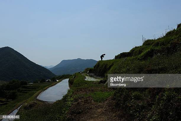 A farmer plants rice seedlings in terraced paddy fields in the Nakayama District of Shodo Island Kagawa Prefecture Japan on Saturday May 14 2016...
