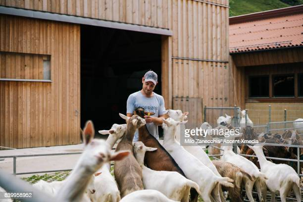 Farmer playing with mountain goats