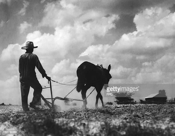A farmer ploughing a field with a mule circa 1930