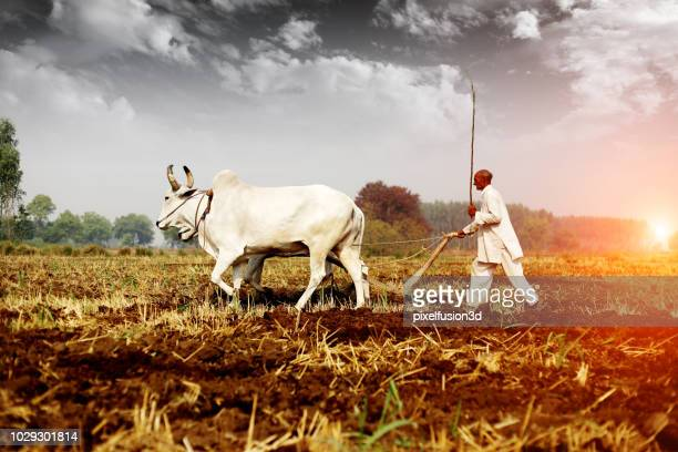 farmer ploughing field - indian culture stock pictures, royalty-free photos & images