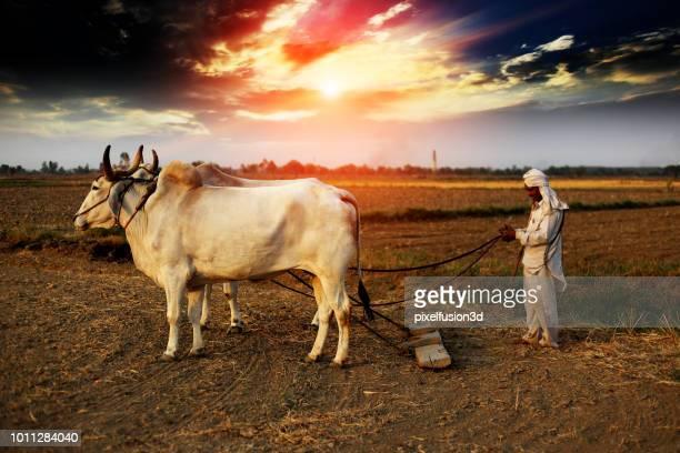Boer ploegen veld met behulp van houten plough
