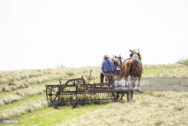 farmer ploughing - animal powered vehicle stock photos and pictures