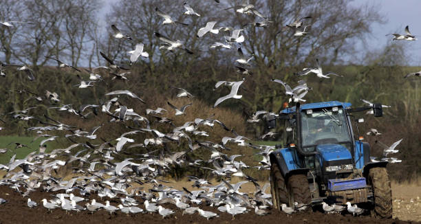 Image result for ploughing surrounded by birds
