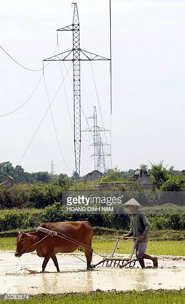 Farmer ploughs a rice field under high-tension electric lines in northern province of Ha Tay, 19 July 2004. The state-owned Electricity of Vietnam...