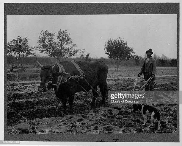 Farmer Plowing Behind an Ox