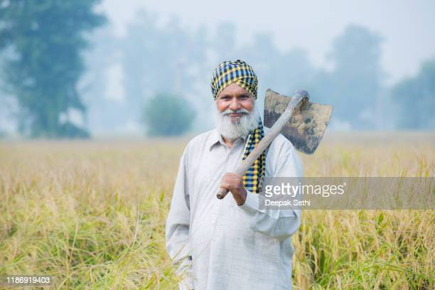 farmer portrait in the wheat field stock photo - punjab india stock pictures, royalty-free photos & images