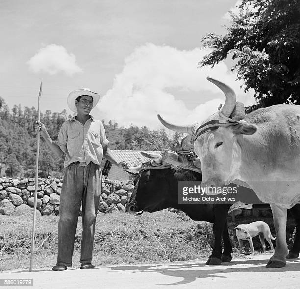 Farmer poses with his oxen on a road in Tegucigalpa, Honduras.