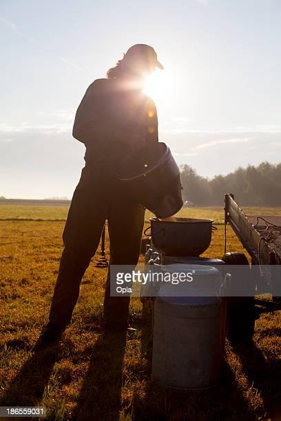 farmer gießen milch - mann beim melken stock-fotos und bilder