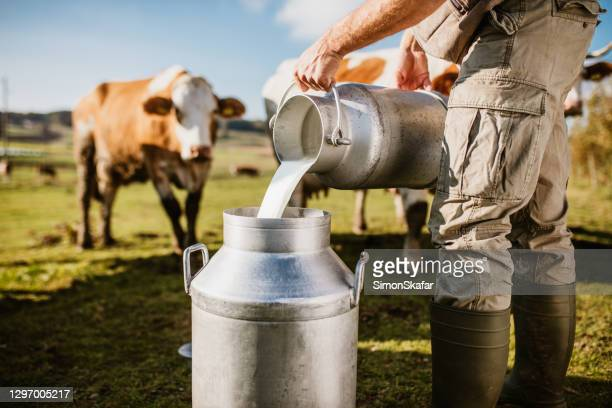 farmer pouring raw milk into container - dairy product stock pictures, royalty-free photos & images