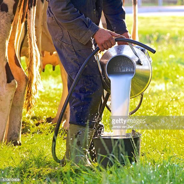 Farmer pours fresh milk in a bucket