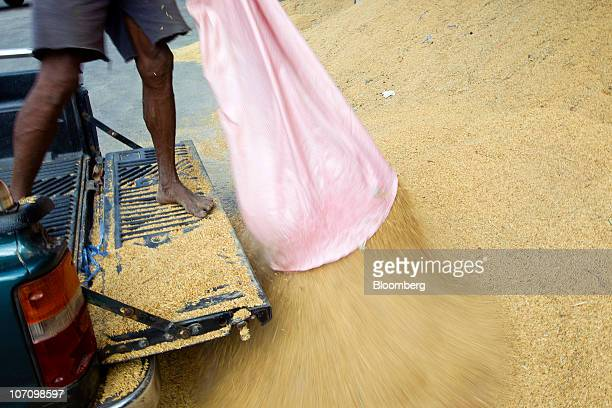 A farmer pours rice on a tipping floor at a rice processing facility in Surin Thailand on Tuesday Nov 23 2010 Thailand the world's biggest rice...