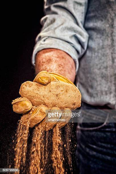 Farmer pulling a potato out of the ground