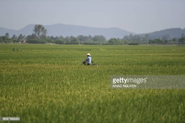 Farmer pushes her bicycle passing through paddy fields in Thanh Hoa province on March 18, 2018.
